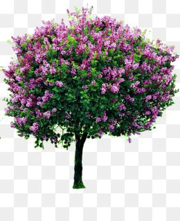 الشجرة الجهنمية